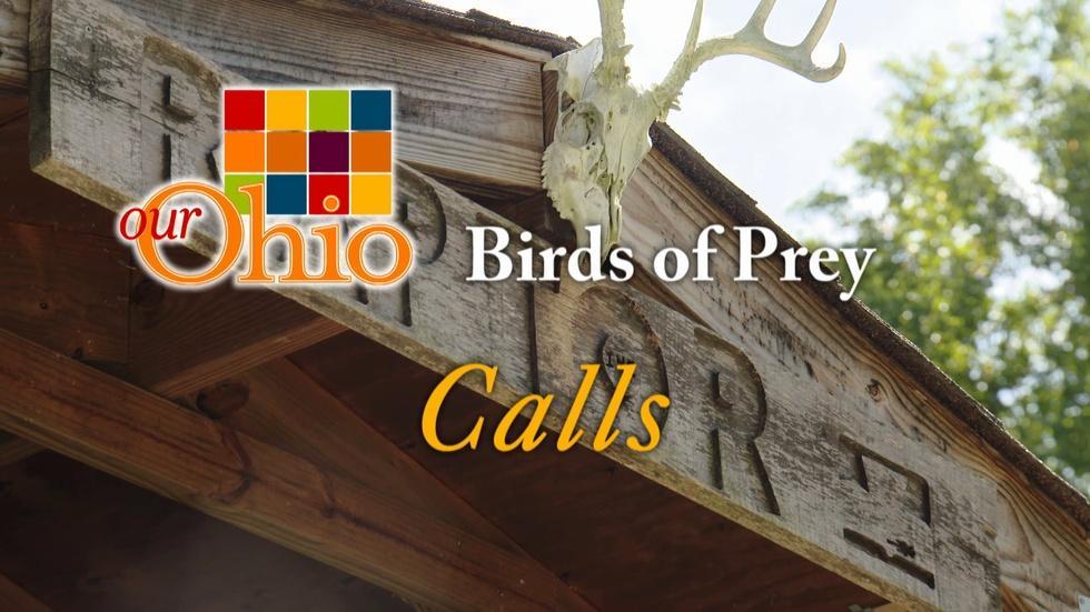 Birds of Prey - Calls image
