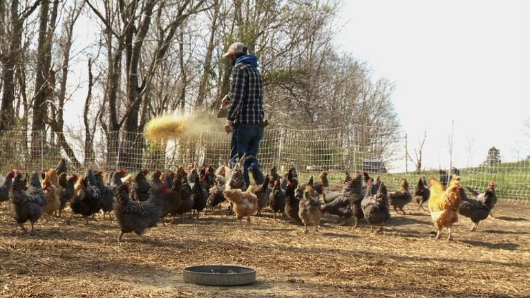 WSIU InFocus: Community Supported Agriculture