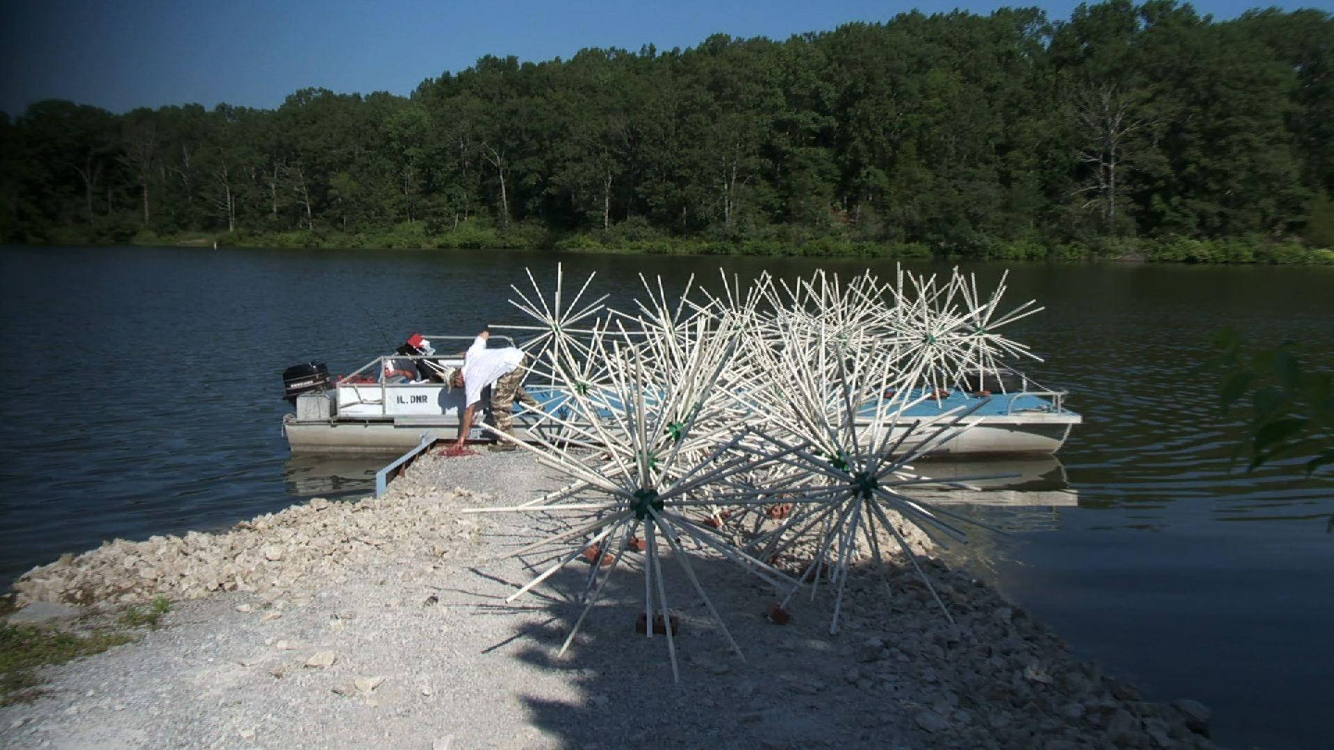 Video porcupine balls watch wsiu infocus online wgby for Porcupine fish attractor