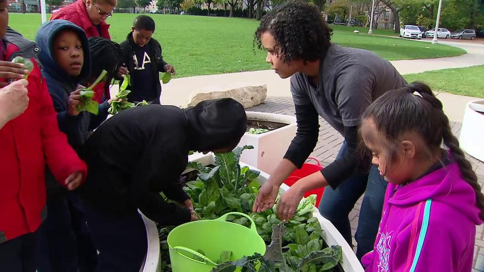 Learning Gardens at CPS Plant Seeds for Healthy Food Choices image