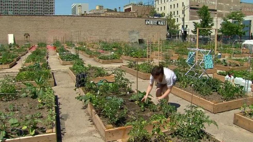 In Focus: Community Gardens image