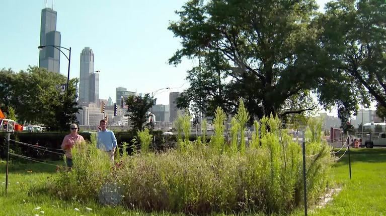 Urban Nature: The Intricate Ecology of Vacant Lots