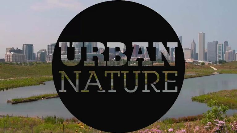 Urban Nature: Urban Nature: Explore the Wild Side of Cities