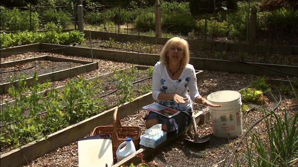 Food Safety for Backyard Gardeners image