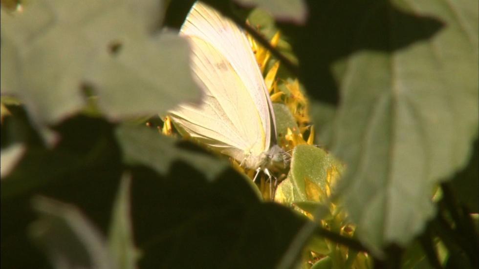 Backyard Butterflies  image