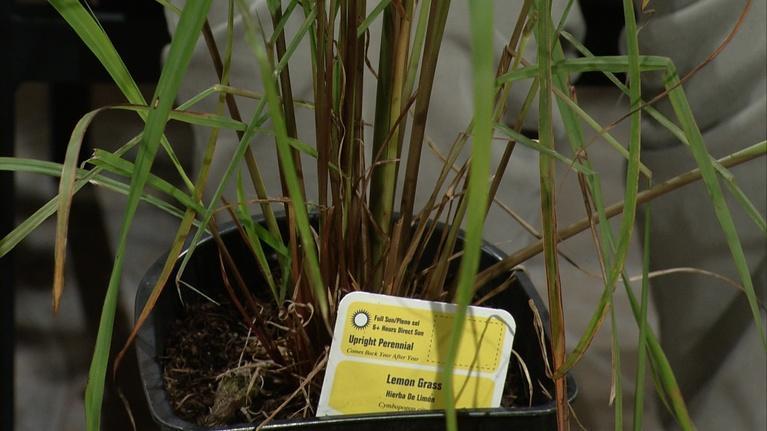 Almanac Gardener: Using Multipurpose Plants