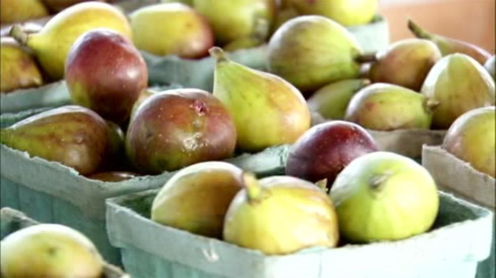 Growing Tasty Figs image