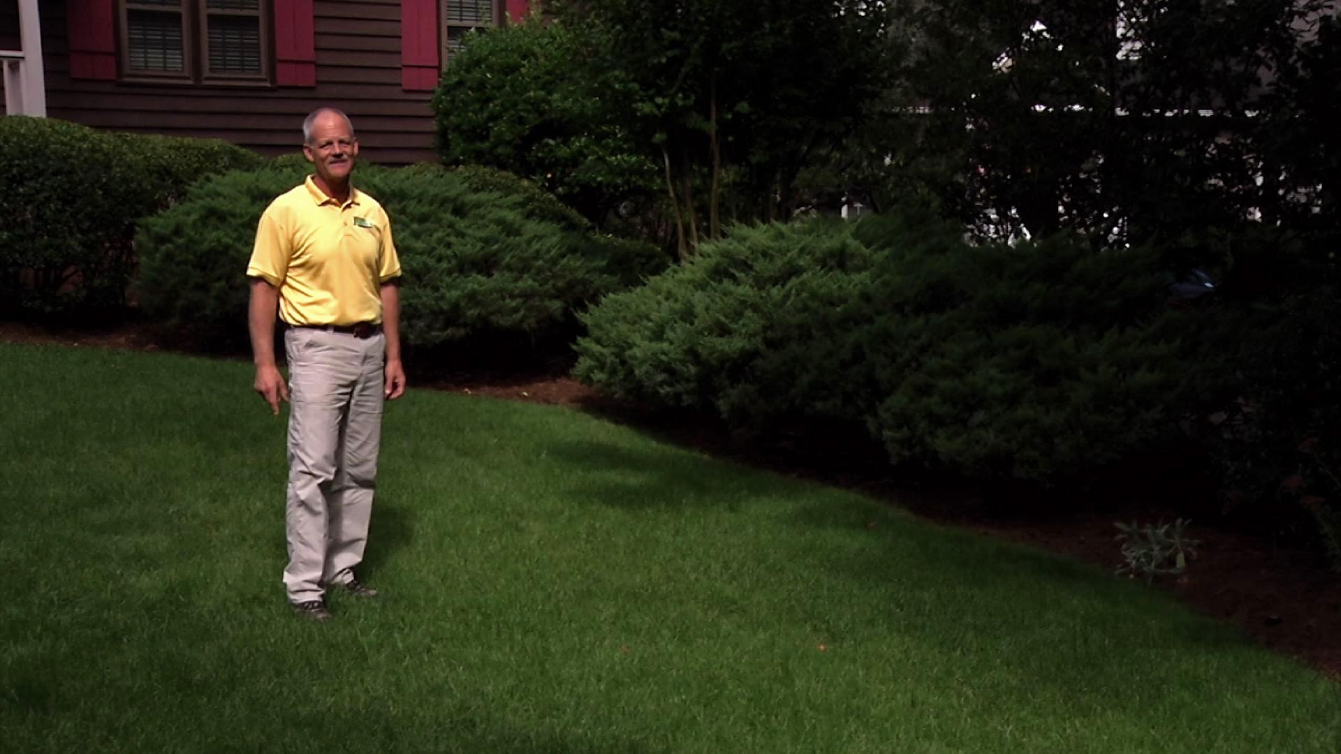 Video sod and lawn care watch in the garden online for Care for new sod