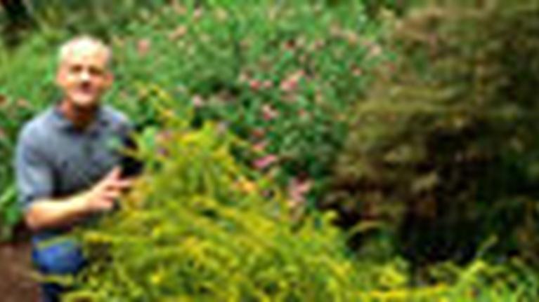 In the Garden: Plant Breeding
