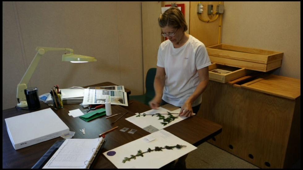 NC Arboretum: Germplasm Repository image