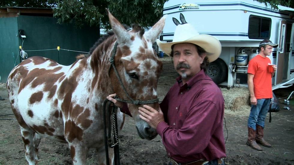 Benson's Mule Days image
