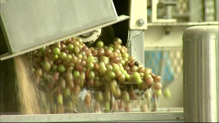North Carolina Rising: Duplin Winery