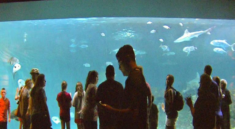UNC-TV Science: NC Science Now Special: Up Close & Coastal
