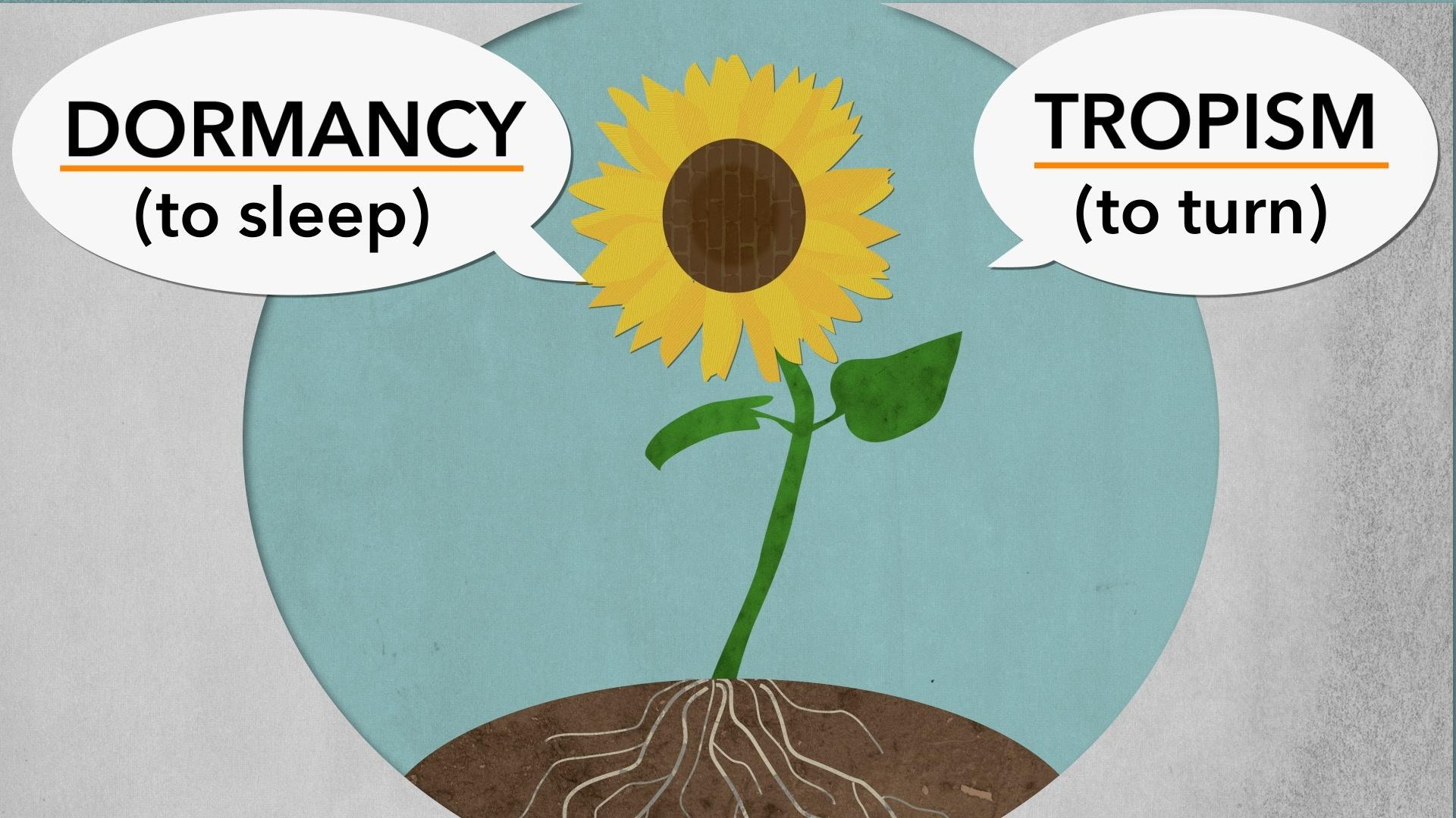 tropism and dormancy