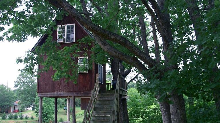 From the Vineyard: Treehouse Vineyard / Biltmore