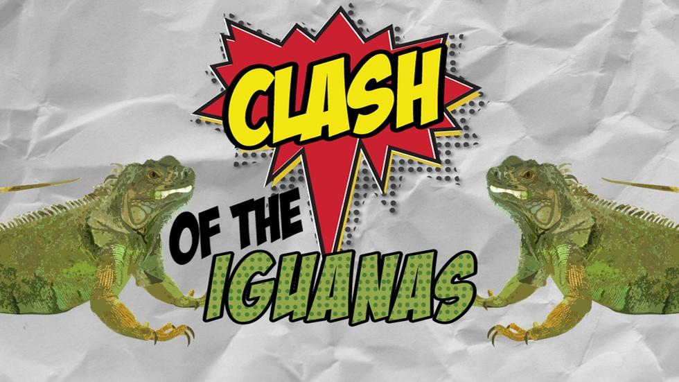 Clash of the Iguanas image