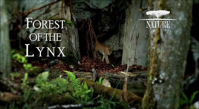 WXEL Presents: Nature: Forest Of The Lynx