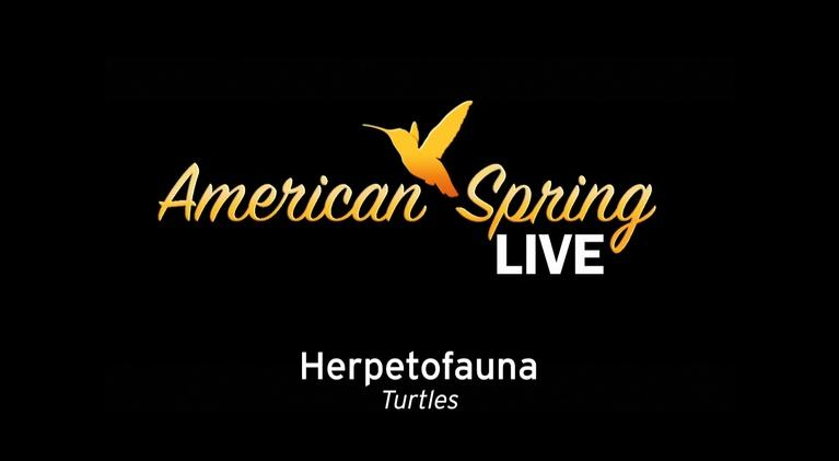 WQLN Local Productions from the 2010's: American Spring Live - Herpetofauna - Turtles Part 1
