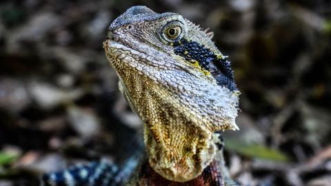 Magical Land of Oz -- Water Dragons