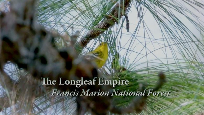 Season 3 Ep. 13: The Longleaf Empire - Francis Marion National Forest logo