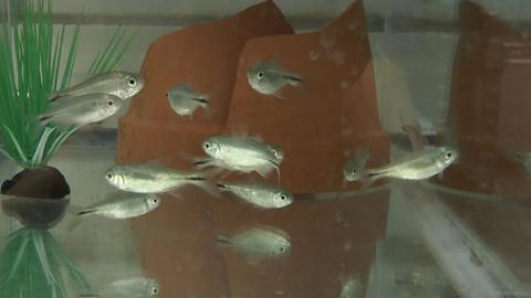 SciTech Now -- Could a blind fish help humans with sleep problems?