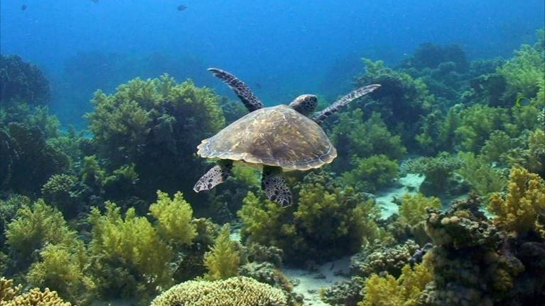 EcoSense for Living: Ocean Health - Creatures Speak