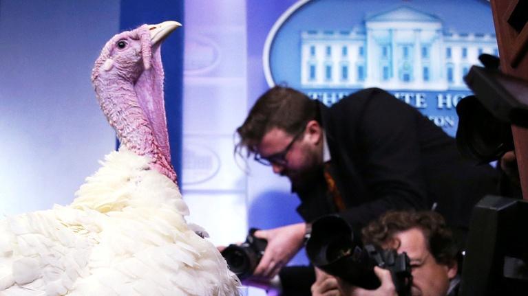 PBS NewsHour: The surprising history behind the Thanksgiving turkey pardon