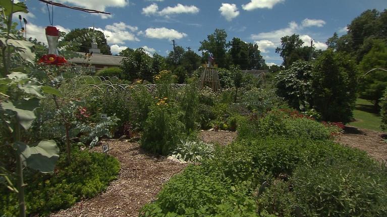 Volunteer Gardener: Volunteer Gardener 2808