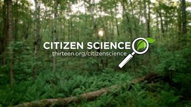 Citizen Scientist: How to Become One