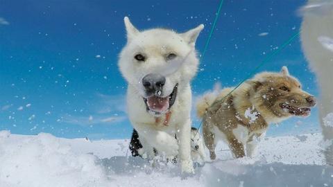 Expedition -- Husky Ride