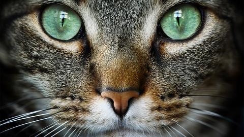 NOVA -- Cat Tales
