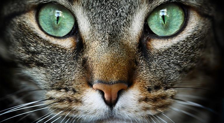 NOVA: Cat Tales