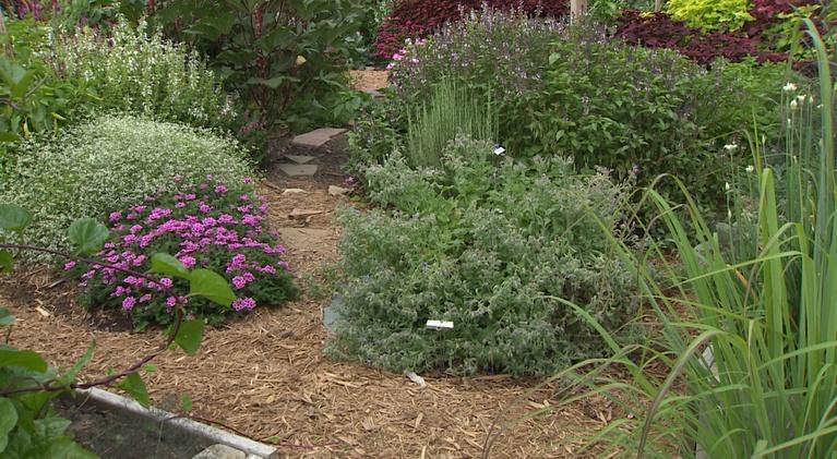 Backyard Farmer: Backyard Farmer: Edible Landscapes