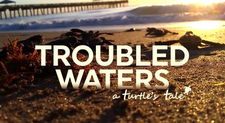 WLRN Documentaries: Troubled Waters: A Turtle's Tale