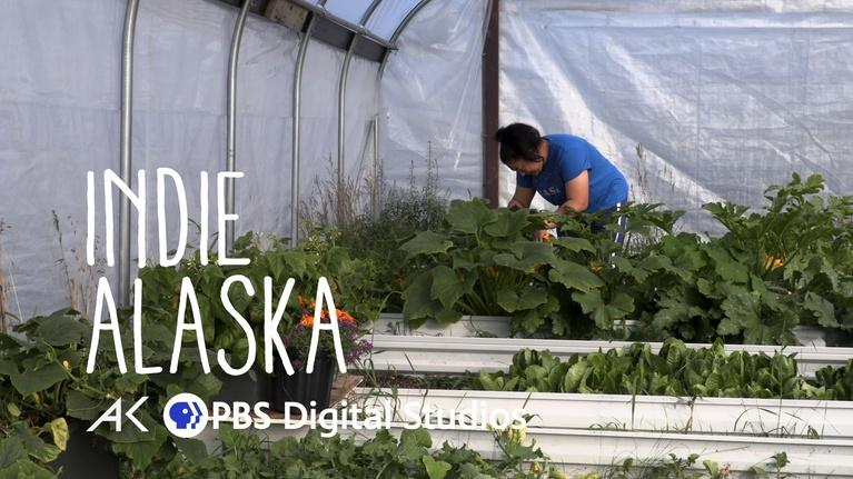 Indie Alaska: From Mammoth to Kale: A look into gardening in the Arctic