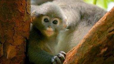 "Preview of Primates: Episode Three ""Protecting Primates"""