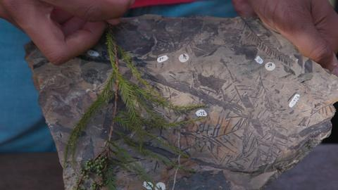 S47 E1: Plant Fossils Hint at Arctic's Swampy Past