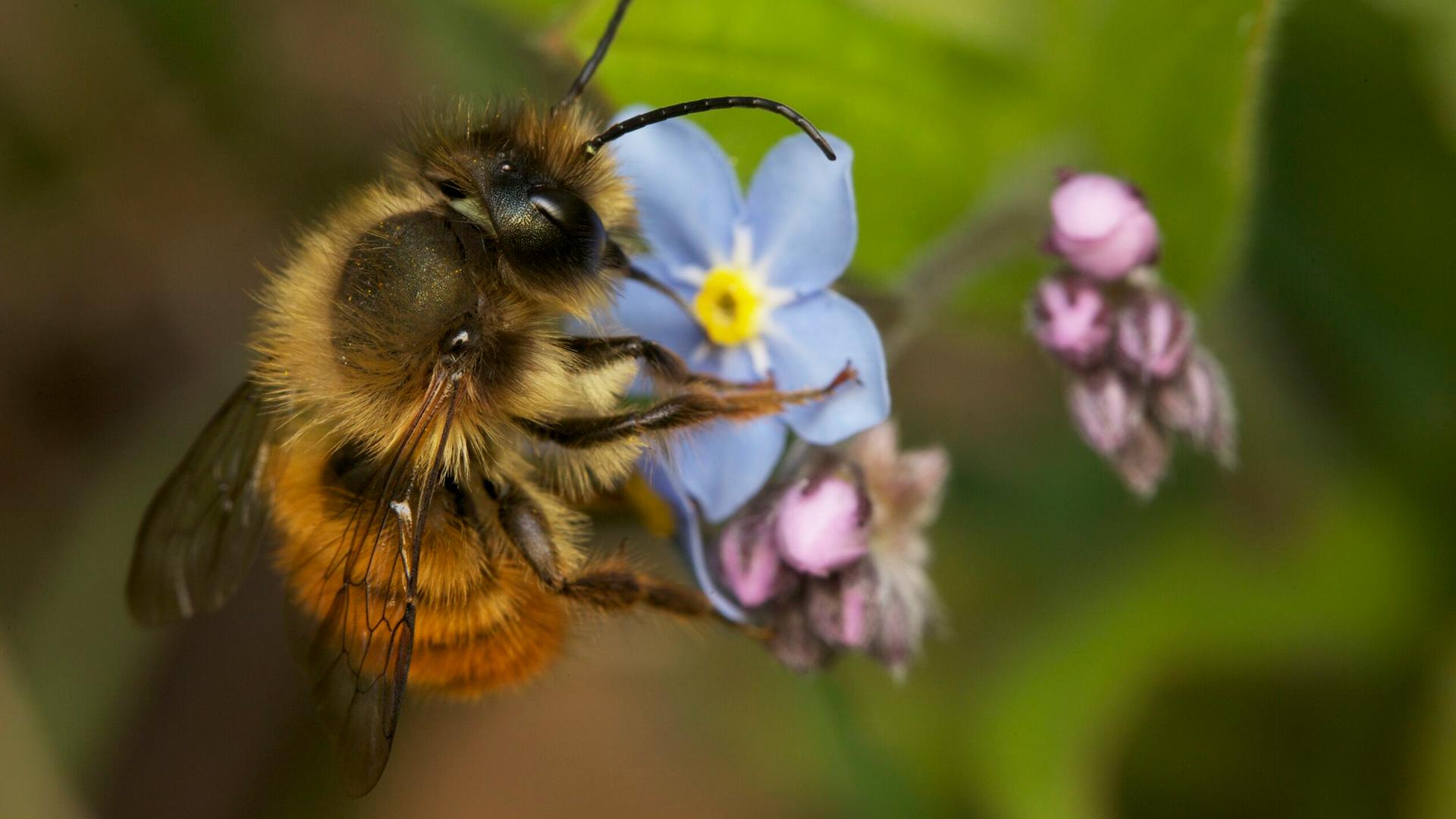 My Garden of a Thousand Bees