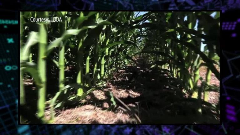 WEDU Quest: 311: Lasers & Farming
