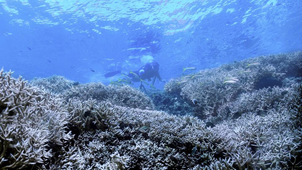 'Chasing Coral' documents destruction of coral reefs image