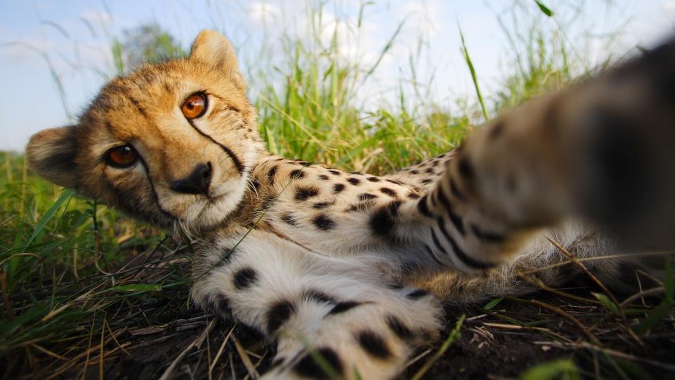 The Cheetah Children image