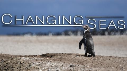 Changing Seas -- Peru's Desert Penguins | Trailer