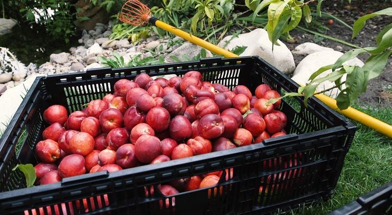 Modern Gardener: Fruit Share