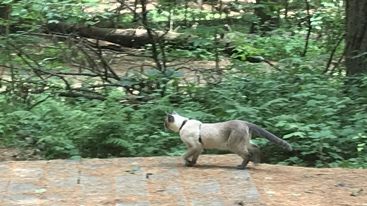 Rico The Hiking Cat