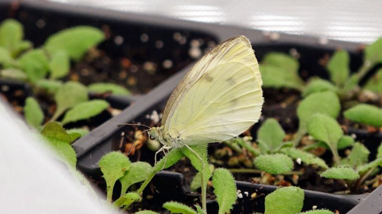 Urban Nature: Backyard Butterflies, Meet Climate Change