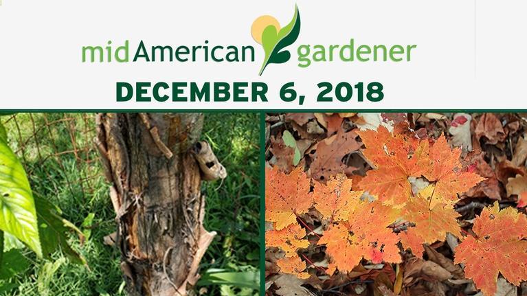 Mid-American Gardener: December 6, 2018 - Mid-American Gardener