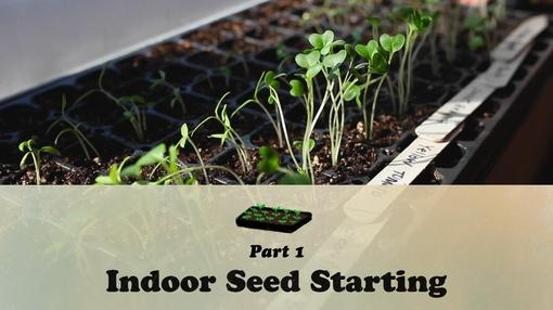 Let's Grow Stuff : Indoor Seed Starting Part One