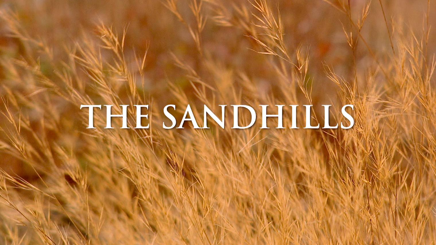 Georgia Outdoors   The Sandhills   Georgia Public Broadcasting