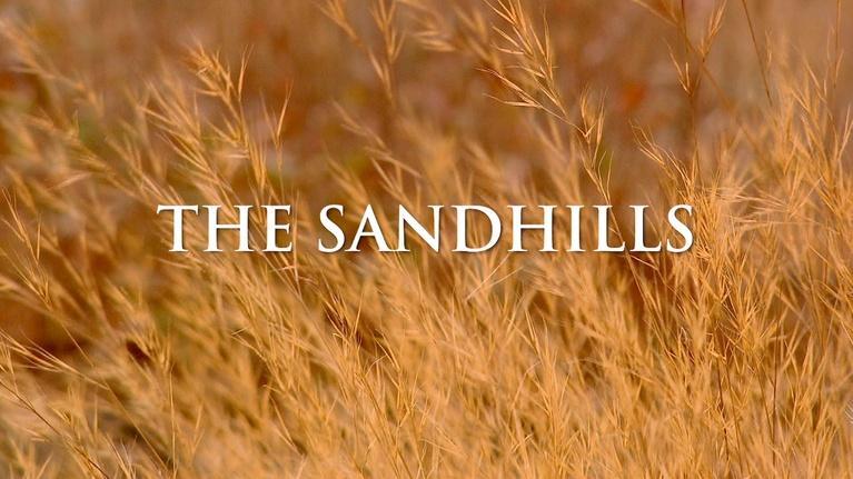 Georgia Outdoors: The Sandhills