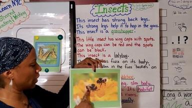 INSECTS - English Captions